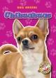 Go to record Chihuahuas