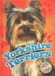 Go to record Yorkshire terriers