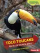 Go to record Toco toucans : big-billed tropical birds