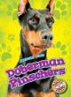 Go to record Doberman pinschers