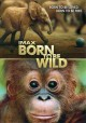 Go to record Born to be wild.