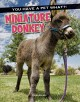 Go to record Miniature donkey